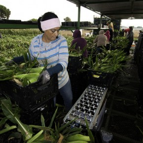 Farmworker Women Awarded $17 Million in Sexual Harassment Suit